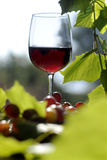 Vidrio de vino rojo en el jardín Foto de archivo libre de regalías