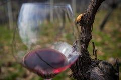 Vidrio en yarda del vino Fotos de archivo libres de regalías