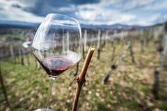 Vidrio en yarda del vino Imagen de archivo