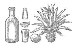 Vidrio y botella de tequila Cactus, sal, cal libre illustration