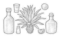 Vidrio y botlle del tequila Cactus, sal, cal Grabado del vintage ilustración del vector