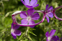 Vidrios de lectura rosados que ven la flor fotos de archivo
