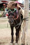 Vidrios del desgaste del caballo Fotos de archivo