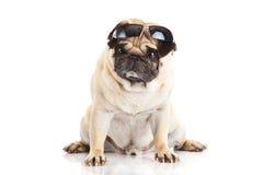 Vidrios del perro del barro amasado en el animal doméstico blanco del fondo Imagen de archivo