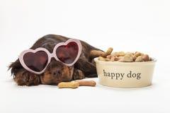 Vidrios en forma de corazón del perro de perrito del perro de aguas por el cuenco de galletas imagen de archivo libre de regalías