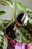 Vidrios en un marco rojo-verde met?lico en las hojas de la planta imagen de archivo