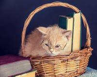 Vidrios que llevan del gatito, sentándose en una cesta con los libros Imagen de archivo