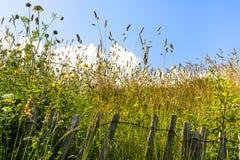vidrios verdes del prado debajo del cielo azul Imagen de archivo libre de regalías