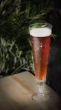 Vidro alto da cerveja vermelha Foto de Stock Royalty Free