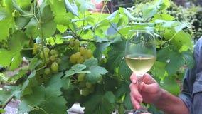 Vidro com vinho branco no close-up do vinhedo de um vidro do vinho branco com uvas video estoque