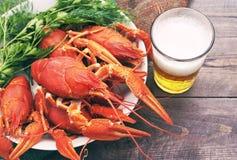 Vidro da cerveja e crawfishes fervidos em uma placa Foto de Stock Royalty Free