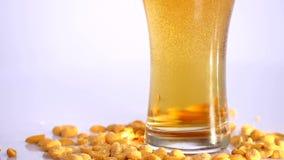 Vidro da cerveja no fundo branco com amendoins conservados Fim acima filme