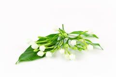 Vidro da flor da gardênia imagem de stock royalty free