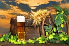 Vidro de cerveja com os cones da cevada e do lúpulo Fotos de Stock Royalty Free