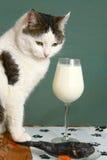 Vidro de vinho de ascendente próximo dos peixes crus e do gato do leite foto de stock royalty free