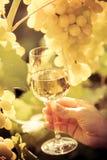 Vidro de vinho e uvas da videira Fotografia de Stock Royalty Free