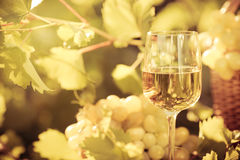 Vidro de vinho e uvas da videira Fotos de Stock