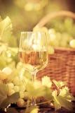 Vidro de vinho e uvas da videira Fotografia de Stock
