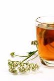 Vidro do chá do valerian Fotografia de Stock