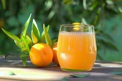 Vidro do suco fresco do mandarino Fotografia de Stock Royalty Free