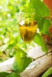 Vidro do vinho imagens de stock