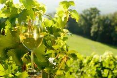 Vidro do vinho branco exposto para o sol, imagens de stock royalty free