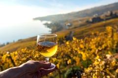 Vidro do vinho branco na mão contra vinhedos na região de Lavaux, Suíça imagens de stock royalty free