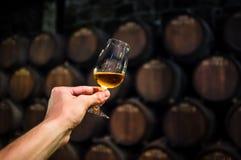 Vidro do vinho na adega de vinho Fotografia de Stock Royalty Free