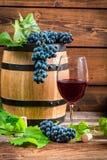 Vidro do vinho vermelho e das uvas Fotografia de Stock Royalty Free