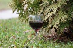 Vidro do vinho vermelho e do frasco Foto de Stock Royalty Free