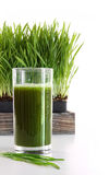 Vidro dos wheatgrass no branco Foto de Stock Royalty Free