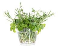 Vidro pequeno com ervas diferentes Fotografia de Stock Royalty Free
