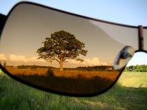 Vidros de sol da árvore fotografia de stock royalty free