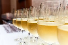 Vidros do vinho branco no contador da barra Imagem de Stock