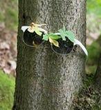 Vidros no tronco de árvore Foto de Stock Royalty Free
