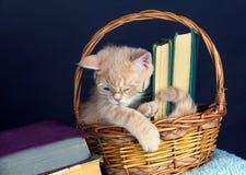 Vidros vestindo do gatinho, sentando-se em uma cesta com livros Imagens de Stock Royalty Free