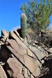 Vidskepelsevildmarkområde, Maricopa, län, Arizona, Förenta staterna Arkivfoto