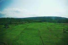 Vidsträckt av grönskafält av Java Land arkivbilder