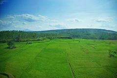 Vidsträckt av grönskafält av Java Land arkivbild