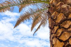 Vidsträckt av moln täcker himlen Palmträd som bara står Sidor som torkar och startar att tröttna solig ljus dag Tropisk cli royaltyfria bilder
