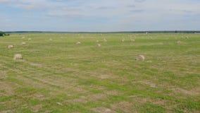 Vidsträckt fält med massor av höstackar stock video
