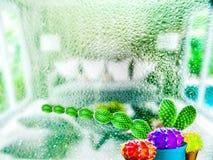 vie d'ami de boule de couleur de longue main de cactus vert et de trois cactus Images libres de droits