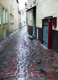 Vie di vecchia città nella pioggia Tallinn, Estonia immagine stock