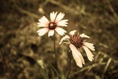 Vie et les fleurs mortes Photos libres de droits
