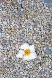 Vie et mort Photo libre de droits