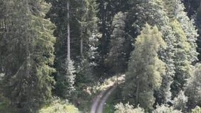Vie et vol d'hirondelle dans la forêt noire clips vidéos