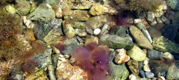 Vie marine Image libre de droits