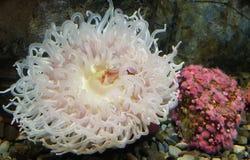 Vie marine colorée photographie stock