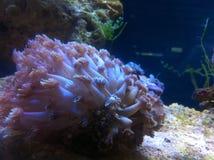 Vie marine dans l'eau de mer Image libre de droits