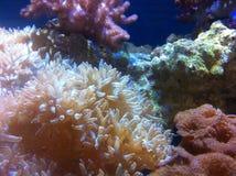 Vie marine dans l'eau de mer Photo stock